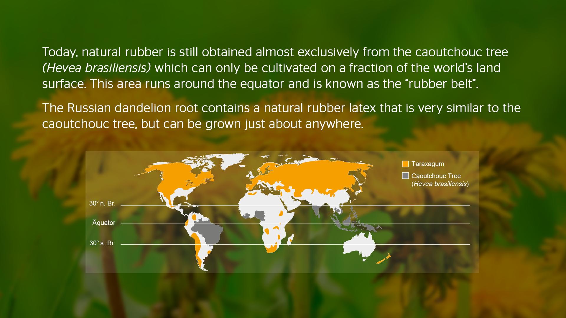 The Rubber Belt