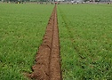 Furrows so straight that you might think they had been drawn by a ruler